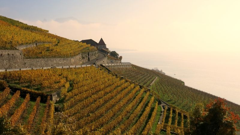 Vineyard Lavaux at the Grand Tour