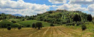 Tuscany Vineyard Header