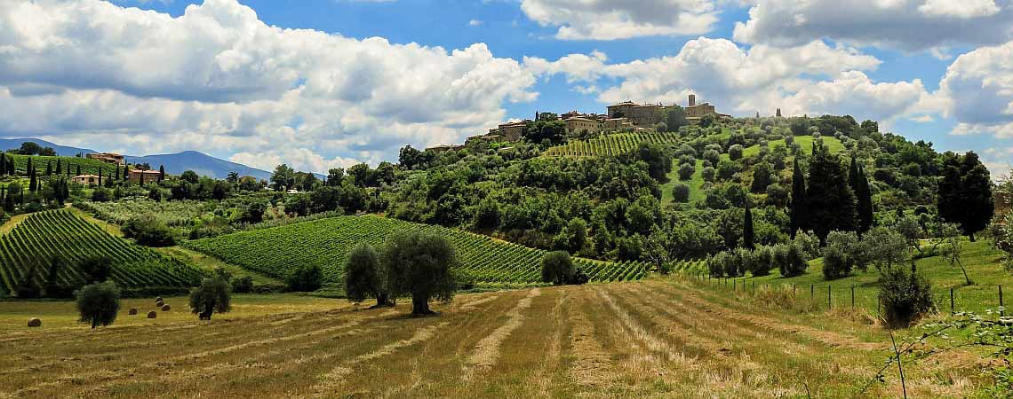 Tuscany Vineyard Header