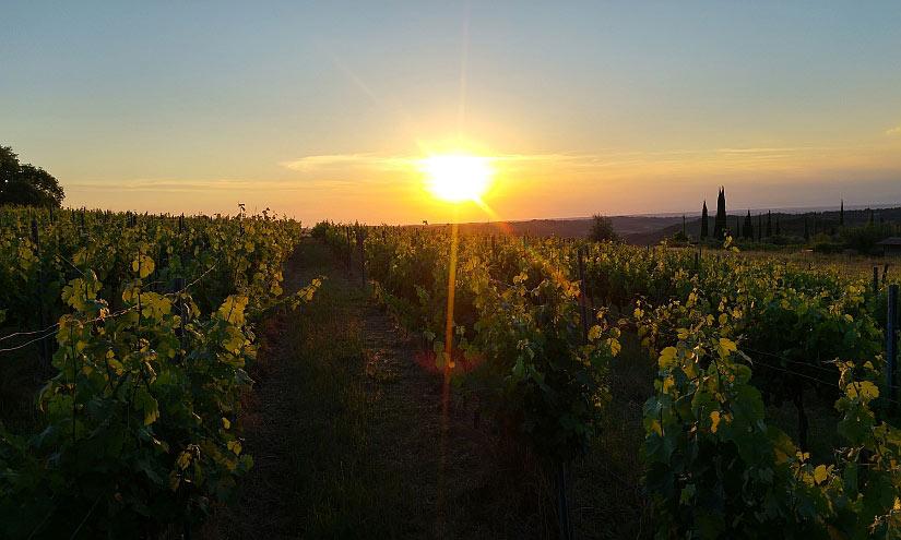Weinberg Sonnenuntergang
